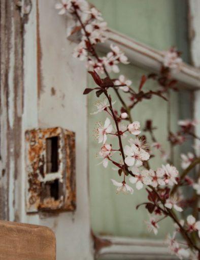 Earth Room - Focus on flowers